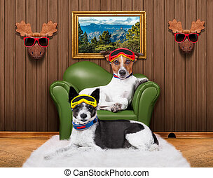 love couple sofa dogs - love couple of dogs sitting on a...