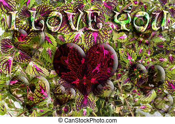 Love Heart of Flowers