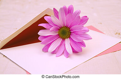 Love Letters - Fresh pink daisy on an envelope with pnik...