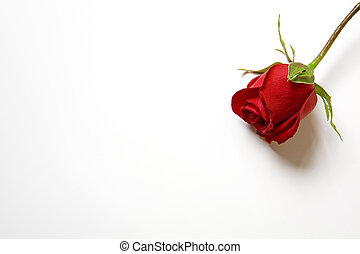 Love my heart rose - Isolated red rose on white background.