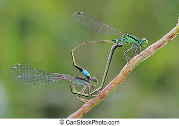 Love of cute dragonfly