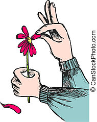 Hands plucking off the petals of a red flower on white background. Vector available