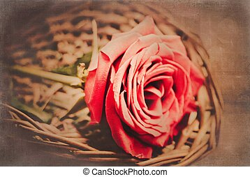LOVE - still life of a single red rose