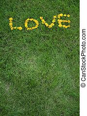 Love written in dandelion flowers