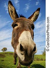 Loveable donkey - Friendly donkey with sunny natural...