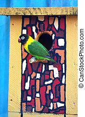 lovebird, 外, 鳥, birdhouse, モデル