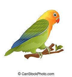 lovebird, agapornis, loro, vector.eps