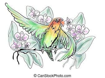 lovebird, flores, loros