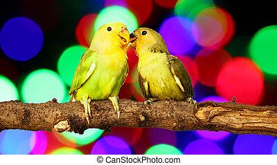lovebird on Blurred fairy lights background