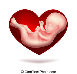 loved child - red heart with human embryo inside