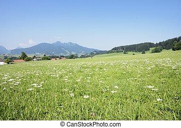 Lovely Allgaeu - Idyllic landscape in the Allgaeu (Bavaria,...
