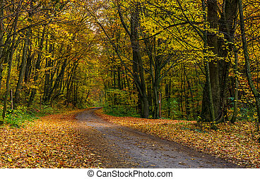asphalt road through forest in yellow foliage - lovely...