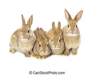lovely baby bunnies - A picture of four lovely baby bunnies