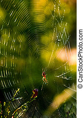 spider in the web on beautiful foliage bokeh - lovely...