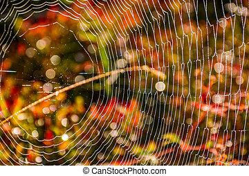 web on beautiful foliage bokeh - lovely background with web...