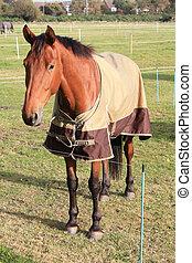 Lovely brown horse