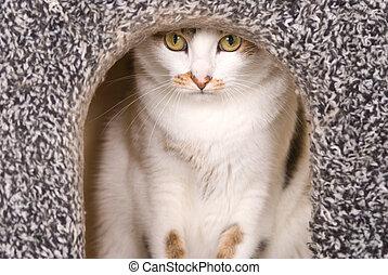 Lovely cat portrait in cat's house