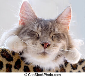 lovely cat sleeping.