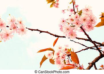 Lovely cherry blossom