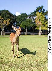 Lovely Deer walking in a park