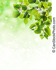 Lovely flowering tree branches, spring background