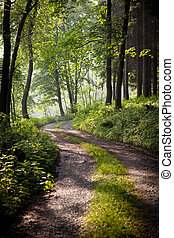 lovely forest path in early morning sunshine