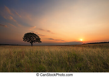Lovely grasland sunset with tree and bright colours clouds