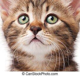 Lovely kitten looks faithfully up over white background ...