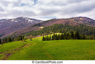 lovely mountainous countryside in springtime. spruce forest...