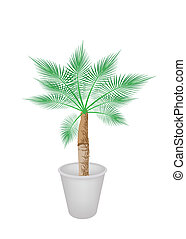 Lovely Palm Tree in Flower Pot - An Illustration of A ...