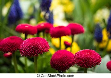 lovely pink flower in garden