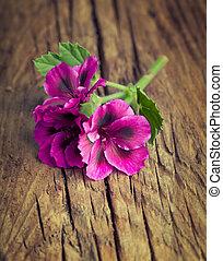 Lovely pink geranium on a vintage wood background
