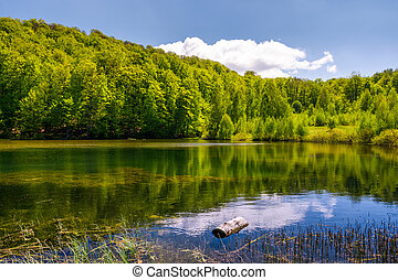 lovely pond in the forest on a hillside. serene day in...