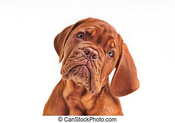 Lovely Puppy Portrait