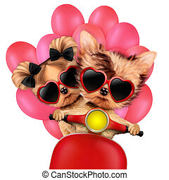 Lovely puppy sitting on motorbike with balloons - Couple of...