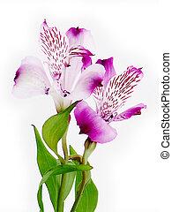 Two lovely purple flowers.