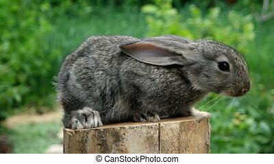 Lovely Rabbit. Beautiful animal of wild nature - Portrait of...