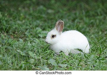Lovely rabbits