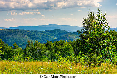 lovely summer landscape in mountains. beautiful scenery with...