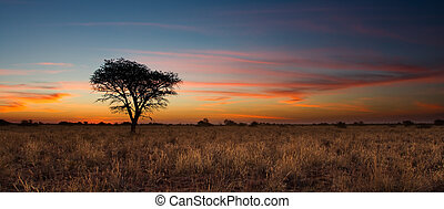 Lovely sunset in Kalahari with dead tree and bright colours