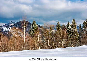 lovely winter landscape in mountains. snowy slope with row...
