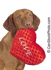 loving dog