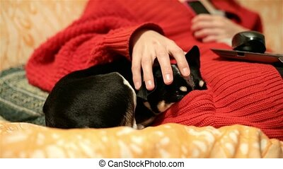 Loving mistress caressing the ears of her chihuahua or toy terrier sitting on the couch with a laptop. Funny dog sleeps, thrusting his nose into the pocket of woman.