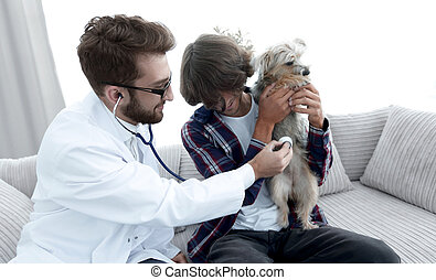 Loving owner with a Yorkshire terrier in the office of a veterinarian