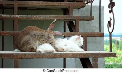 Loving rabbit and a white cat on the steps