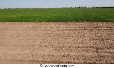 Low aerial shot of a green wheat field flashing quickly under a shooting drone