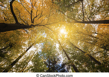 Low angle of a forest in autumn, Dense woods with thick canopies in sunny autumn weather, Low angle of a beautiful forest in autumn