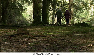 Low angle of two people walking through the woods - Wide ...