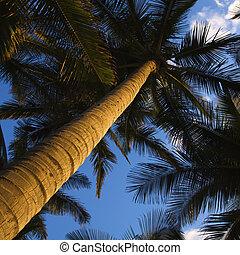 Low angle palm tree.