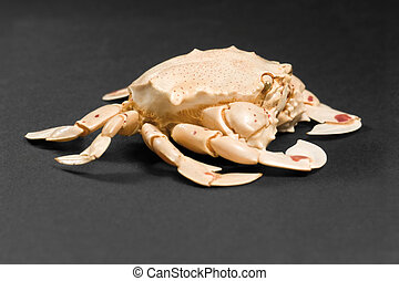 moon crab in dark back - low angle shot of a moon crab in ...
